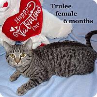 Adopt A Pet :: Trulee - Bentonville, AR