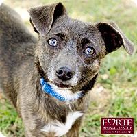 Adopt A Pet :: Pickle - Marina del Rey, CA