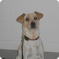 Adopt A Pet :: Austin - Lockhart, TX