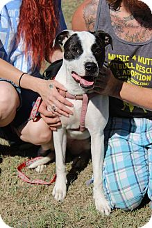 Pit Bull Terrier Mix Dog for adoption in Wichita Falls, Texas - Stella
