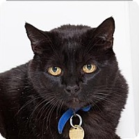 Adopt A Pet :: Sammy - San Luis Obispo, CA