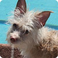Adopt A Pet :: Jude - Henderson, NV