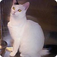 Adopt A Pet :: Sheldon - Fullerton, CA