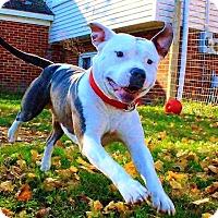 Adopt A Pet :: Yukon - Lapeer, MI