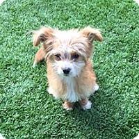 Adopt A Pet :: JASPER - Gustine, CA