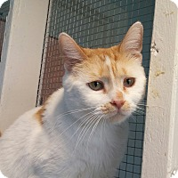 Adopt A Pet :: Spots Aka Dawn - Port Clinton, OH