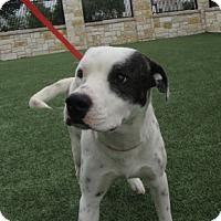 Adopt A Pet :: Tiny $20 - North Richland Hills, TX