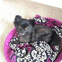 Adopt A Pet :: Lexi - Leduc, AB