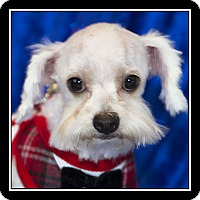 Adopt A Pet :: Zane - San Diego, CA