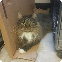 Adopt A Pet :: Kittery - Plainville, MA