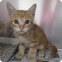 Adopt A Pet :: Waverly  $60 - North Richland Hills, TX