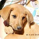 Adopt A Pet :: Hero (12 lb)