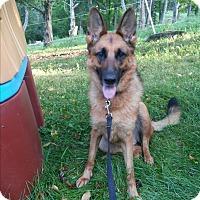 Adopt A Pet :: Heidi - Louisville, KY