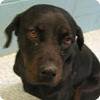 Adopt A Pet :: Faith - Stillwater, OK