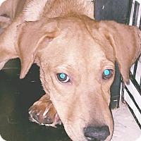 Adopt A Pet :: Krista - Phoenix, AZ
