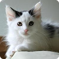 Adopt A Pet :: Jambu - San Carlos, CA