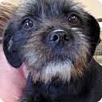 Adopt A Pet :: Winnie - Boulder, CO