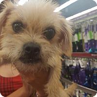 Adopt A Pet :: Spencer - Fresno, CA