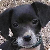 Adopt A Pet :: Bitsy - Cedartown, GA