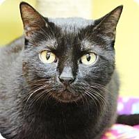 Adopt A Pet :: Taz - Benbrook, TX