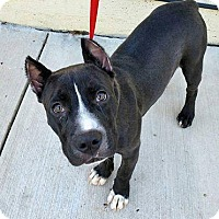 Pit Bull Terrier Mix Dog for adoption in Madison, Alabama - Kade