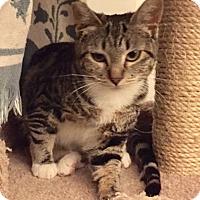 Adopt A Pet :: MILA - Brea, CA