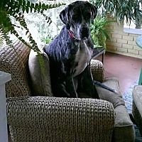 Adopt A Pet :: Milo - Gallatin, TN