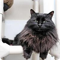 Adopt A Pet :: Center - Boise, ID
