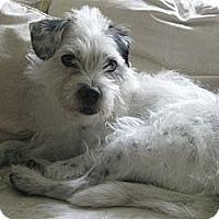 Adopt A Pet :: SEBASTIAN - Mission Viejo, CA