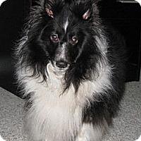 Adopt A Pet :: Zoey - Charlottesville, VA