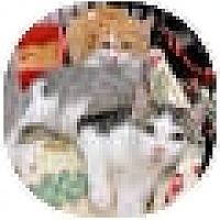 Adopt A Pet :: Mac - Harrisburg, NC