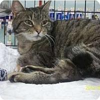 Adopt A Pet :: Maggie - Riverside, RI