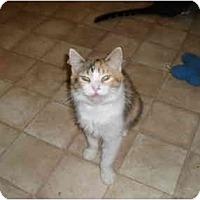 Adopt A Pet :: Larissa - Hamburg, NY