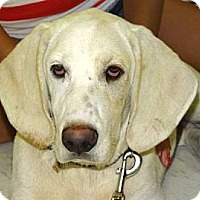 Adopt A Pet :: COME MEET River Belle - Westport, CT