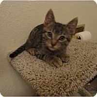 Adopt A Pet :: Victor - Phoenix, AZ