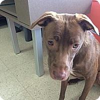 Adopt A Pet :: Daisy - Vista, CA