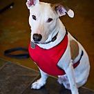 Adopt A Pet :: Beaumont