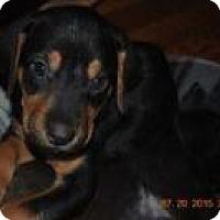 Adopt A Pet :: Spanky - Marlton, NJ