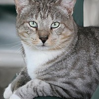 Adopt A Pet :: Hemi - North Fort Myers, FL