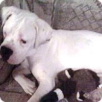 Adopt A Pet :: Jack - Brentwood, TN