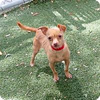 Adopt A Pet :: Nugget - Vacaville, CA
