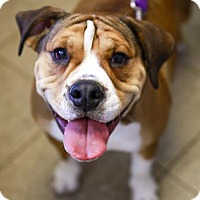 Adopt A Pet :: Nugget - Kettering, OH