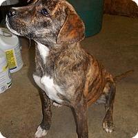 Adopt A Pet :: *Flower - PENDING - Westport, CT