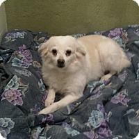 Adopt A Pet :: Whisper - Oak Ridge, NJ
