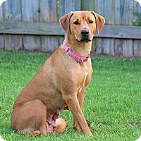 Adopt A Pet :: America - Austin, TX