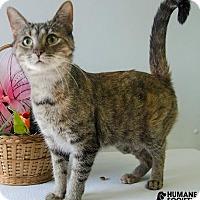 Adopt A Pet :: BEATRIX - Sandusky, OH