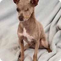 Adopt A Pet :: Missy - Mesa, AZ