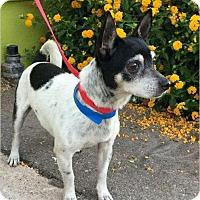 Adopt A Pet :: Checkers - Phoenix, AZ