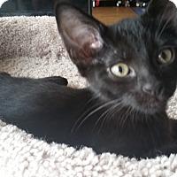 Adopt A Pet :: Rose - Garland, TX
