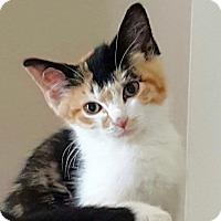 Adopt A Pet :: Priscilla - Long Beach, NY